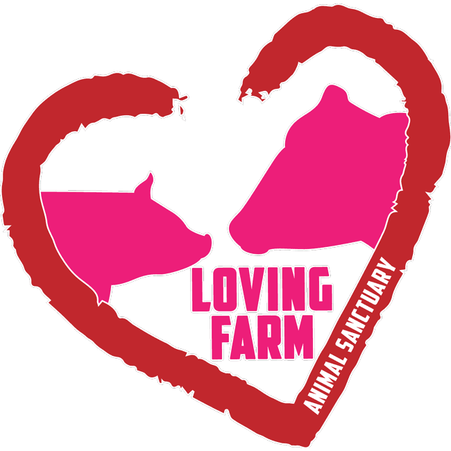 Open House at Loving Farm Animal Sanctuary this Saturday!